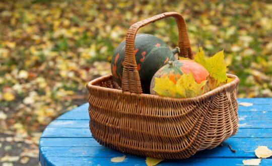 L'automne au potager - Mon Petit Potager